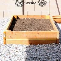 The beginning of our summer garden